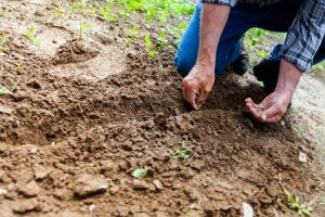 The nurturing power of the soil